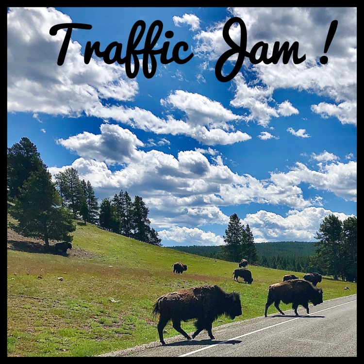 Traffic Jam of Bison in Yellowstone National Park, Wyoming.
