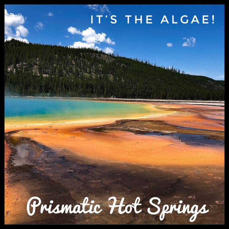 Prismatic hot springs in Yellowstone National Park.